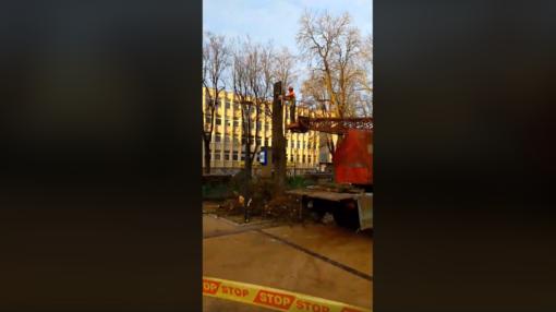 Medžių gynėjas apgailestauja: išsaugoti nepavyko