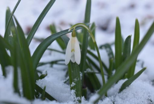 Pavasaris bunda – sušils iki 13 laipsnių