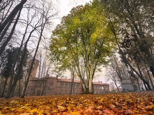 Europos metų medžio konkurse – ir Raudonės pilies reklama