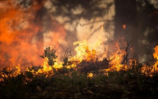 Šalia Vilniaus Nemenčinės plente – miško gaisras