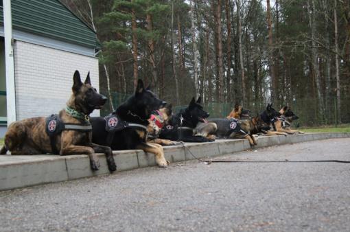 Tarptautinių kursų metu tarnybiniai šunys mokysis aptikti sprogmenis