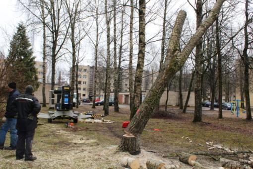 Aistros dėl medžių: vieni prašo nupjauti, kiti piktinasi