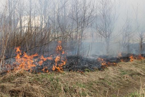 Pernykštės žolės gaisrai kelia vis didesnį pavojų žmonėms ir gamtai