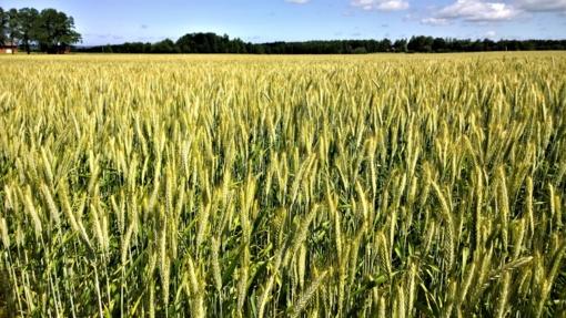 Mažinama perteklinė administracinė našta žemdirbiams