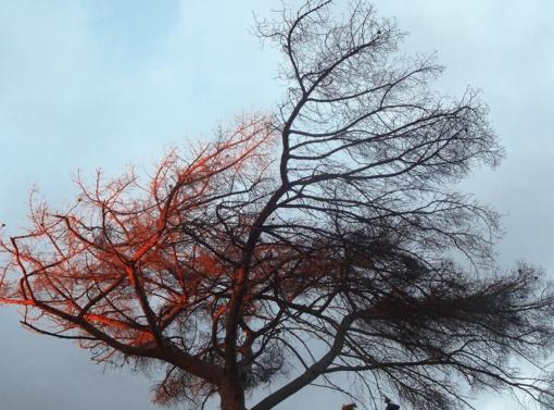 Kelininkai perspėja: dėl gūsingo vėjo ant kelių gali būti nukritusių medžių ar šakų