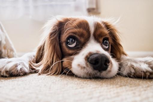 Šunų augintojos Rasos istorija: įkando erkė, ir prasidėjo siaubo filmas