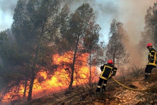 Savaitgalį pajūrio regione degė miškai