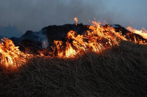 Savaitgalį ugniagesiai beveik 400 kartų vyko gesinti žolės