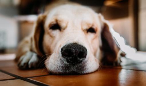 Prienuose pradėtas ikiteisminis tyrimas dėl galimo šuns nunuodijimo