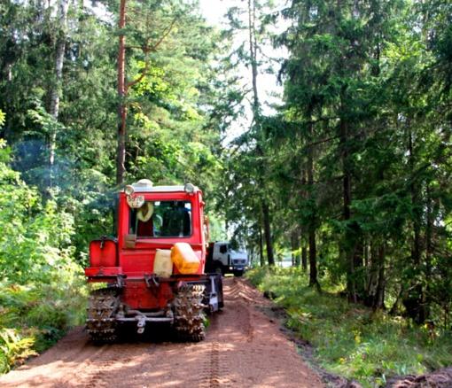 Ant miško kelių subyrės milijonai