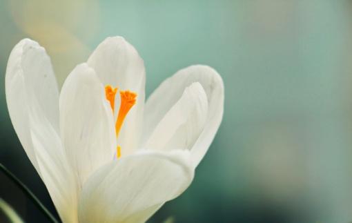 Balandžio 18-oji: vardadieniai, astrologija