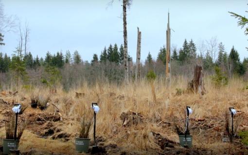 Kviečia į miško sodinimo šventę