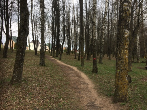 Pakruojo parke kirs medžius?