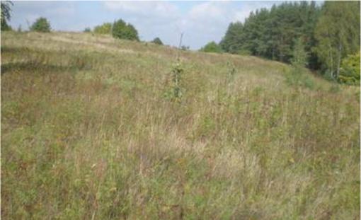 Savivaldybė grįžta prie Karaliaus Mindaugo ąžuolyno parko projekto