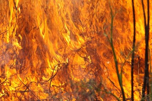 Ugniagesiai gelbėtojai įspėja: ugnis siaubia ištisus kaimus