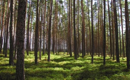 Baigiamos rinkti paraiškos miškų veisimui