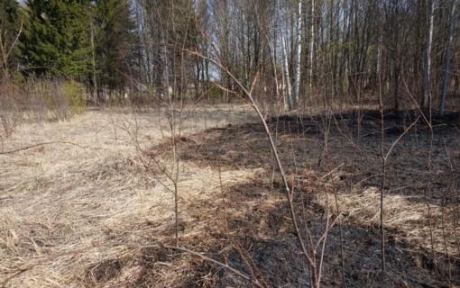 Šiaulių rajone degė miškų paklotės