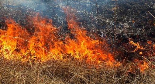 Šiaulių rajone išdegė kviečių laukas