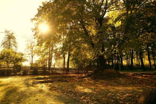 J. Basanavičiaus gimtinė kviečia švęsti didžiausio žmogaus rankomis sodinto Ąžuolyno trisdešimtmetį
