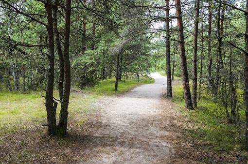 Apribotas lankymasis Varėnos rajono miškuose