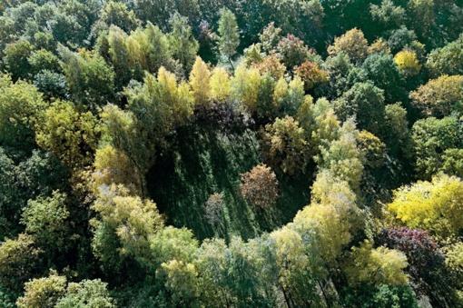 J. Basanavičiaus gimtinėje minimas ąžuolyno 30-metis