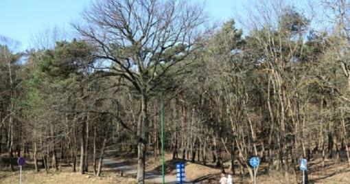 Vardiniai medžiai traukiami iš užmaršties