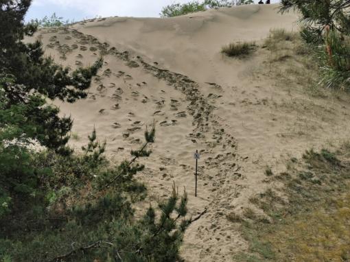 Prašo nevaikščioti Parnidžio kopa neleistinose vietose