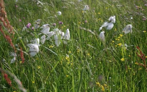 Vis daugiau šalies gyventojų rūpi biologinės įvairovės išsaugojimas