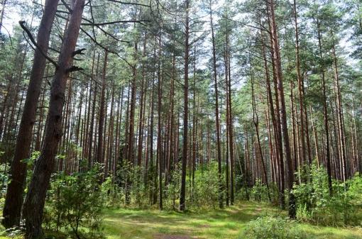 Dėl Druskininkų aerodromo naudojimo miškų purškimui