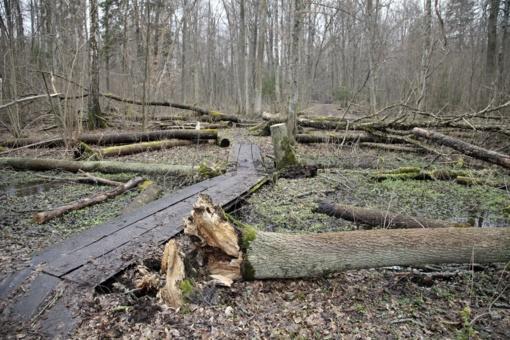 Rizikoms miškuose valdyti– palankesnės paramos sąlygos