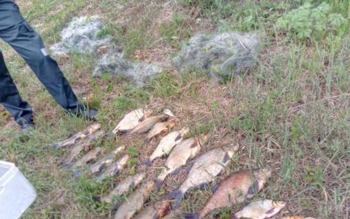 Trakų rajone per pasalą sulaikytas tinklais žvejojęs pažeidėjas
