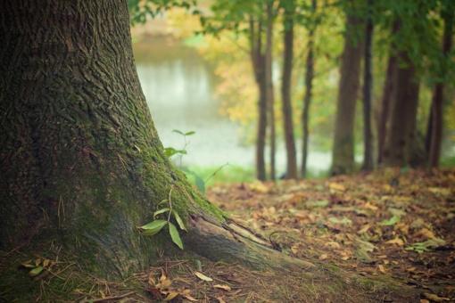 Poligonų plėtra: Vyriausybė leido kirsti dalį miško Švenčionių ir Jonavos rajonuose