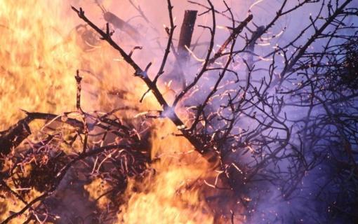 Molėtų rajone padegtas miškas