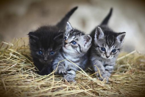 Šiauliuose nuskandinti kačiukai