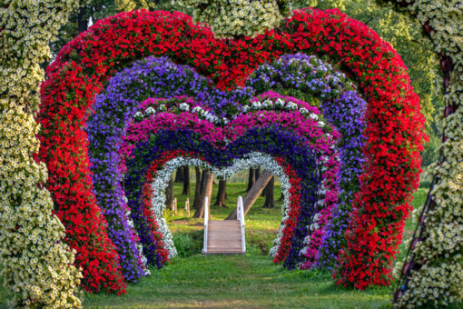 Ilgąjį savaitgalį Pakruojo dvaras pražydo gėlių kilimais