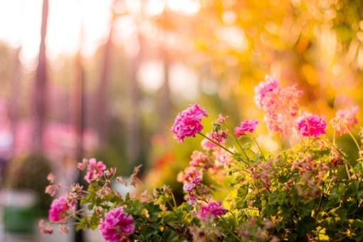 Bus renkamas gražiausias Kupiškio sodininkų bendrijos sodas