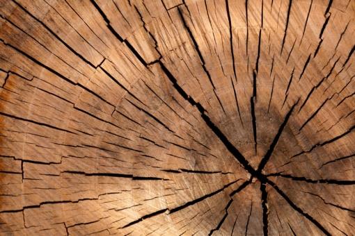 Ilgapirščiai pavogė medienos už daugiau nei 2000 eurų