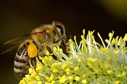 Vasaros džiaugsmus temdo alergija vabzdžių įgėlimui