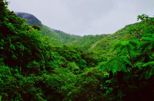 Drėgnųjų atogrąžų miškų atsodinimas