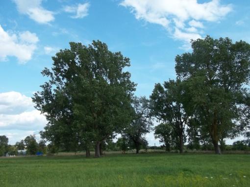 Medžiai kertami tie, kuriuos būtina kirsti