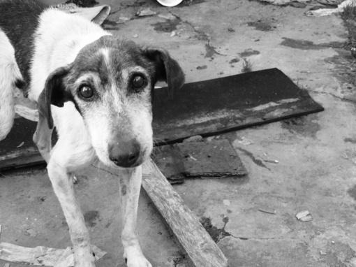 Kaune požeminiame šiukšlių konteineryje rastas šuo