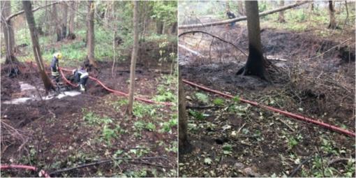 Turmanto seniūnijoje smilko durpinga miško paklotė