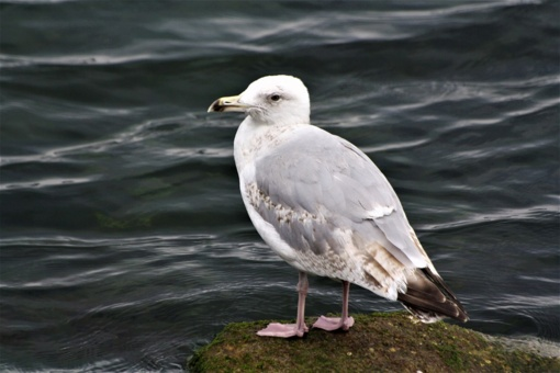 Sausros pasekmės: Nemuno salose paukščių laukė tragedija (vaizdo įrašas)