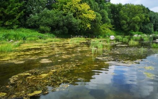 """Jonavos rajone, siekiant įvertinti """"Rail Baltica"""" statybų poveikį žuvims, vykdyta specialioji žvejyba"""