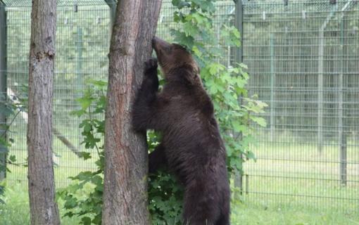Teismas priėmė sprendimą dėl žiauraus elgesio su rudosiomis meškomis