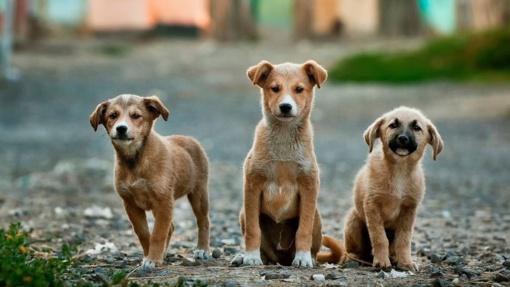 Vilnietis pensininkas šokiravo kaimynus: vos gimusius šuniukus palaidojo gyvus