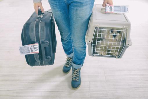 Planuojantiems kelionę lėktuvu su augintinu – svarbūs veterinarės patarimai