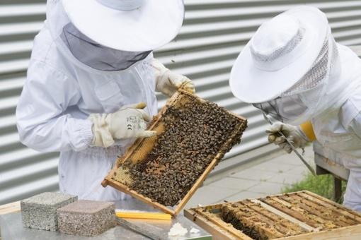Kvietimas teikti paraiškas paramai už bičių maitinimą gauti