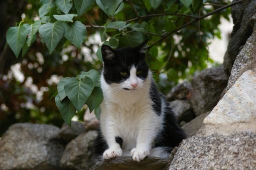 Kavarske išgelbėtas katinas