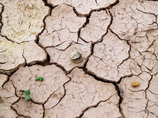 Europą kepinusios karščio bangos – ne pabaiga: bus dar blogiau